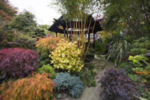 壁纸、、イングランド、ガーデン、秋、パゴダ、低木、Walsall Garden、自然
