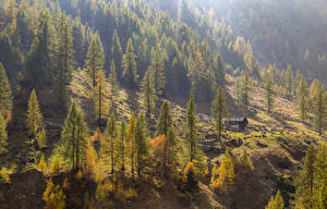 Image Italy Seasons Autumn Trees Spruce Le Piane Piedmont Nature