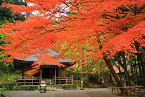 壁纸、、日本、京都市、秋、公園、建物、木、自然