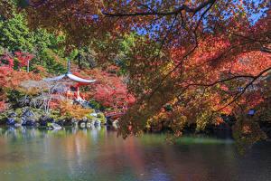 壁纸、、日本、京都市、公園、池、枝、自然