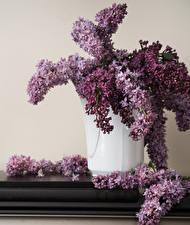 Hintergrundbilder Syringa Vase Ast Blumen