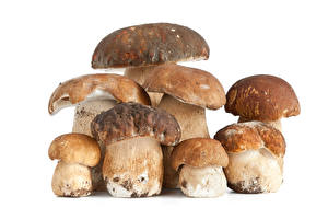 Wallpaper Mushrooms Penny bun White background Food