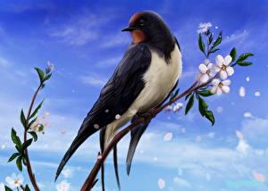Bilder Gezeichnet Vögel Ast Tiere
