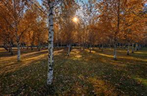 Bilder Parks Herbst Birken Blatt Lichtstrahl Bäume