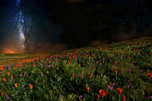 Bilder Mohnblumen Himmel Stern Felder Nacht