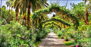 Sfondi desktop Spagna Parco Isole Canarie Arbusti Avenue Disegno Palme