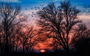 Fotos Sonnenaufgänge und Sonnenuntergänge Bäume Ast Silhouetten Natur