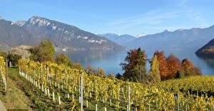 Hintergrundbilder Schweiz Landschaftsfotografie See Gebirge Herbst Strauch Lake Thun Natur