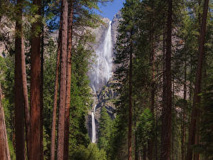 Photo USA Park Waterfalls Yosemite Trees Trunk tree Cliff Nature