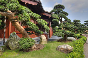 Sfondi desktop Cina Hong Kong Giardini La casa Pietre Alberi Arbusti Nan Lian Garden Natura
