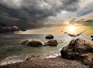 Sfondi desktop La costa Pietre Cielo Uccelli Gabbiani Nubi Il lampo Natura