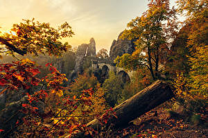 Image Germany Autumn Cliff Branches Trees Foliage Saxony Nature