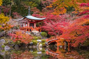 壁纸、、日本、京都市、ガーデン、秋、パゴダ、池、橋、自然