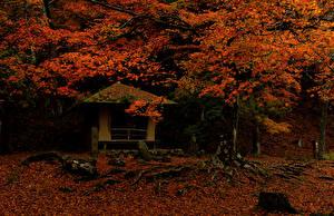 壁纸、、日本、公園、秋、木の葉、木、Nara Park、自然