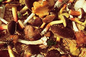Bilder Pilze Natur Großansicht Natur
