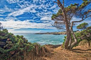 Fotos Vereinigte Staaten Himmel Küste Kalifornien Wolke Bucht Baumstamm Natur
