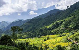 Fotos Vietnam Gebirge Wald Felder Wolke Hoang Su Phi Natur