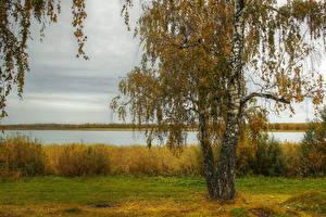Fotos Herbst Flusse Bäume Birken