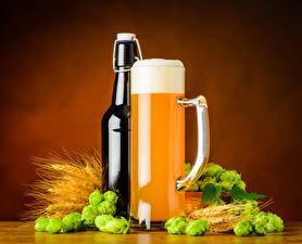 Wallpaper Beer Hops Colored background Bottle Mug Foam Ear botany Food