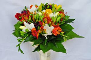 Bilder Sträuße Freesie Grauer Hintergrund Blüte