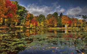 Fotos Kanada Flusse Herbst Quebec Bäume Sherbrooke Natur