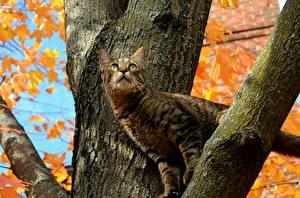 Fotos Katze Ast Baumstamm Tiere