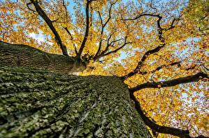 Pictures Closeup Autumn Bottom view Trunk tree Branches Trees Nature