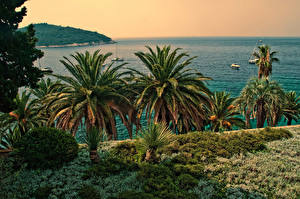 Image Croatia Sea Coast Dubrovnik Palms Nature
