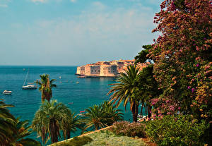 Photo Croatia Sea Coast Houses Dubrovnik Palms Nature
