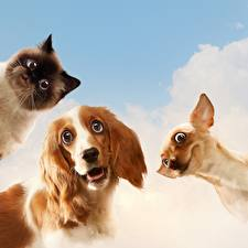 Image Dogs Cats Funny Glance Animals