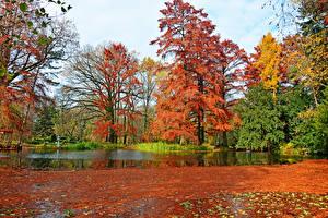 Image Hungary Parks Autumn Pond Trees Leaf Botanical garden Szeged Nature Nature
