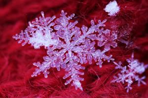Desktop hintergrundbilder Makrofotografie Großansicht Schneeflocken