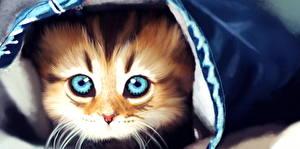 Bilder Gezeichnet Katze Schnurrhaare Vibrisse Blick Kätzchen