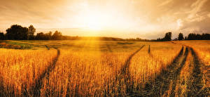 Fotos Landschaftsfotografie Acker Sonnenaufgänge und Sonnenuntergänge Ähren Natur