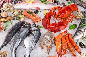 Bilder Meeresfrüchte Fische - Lebensmittel Hummerartige Caridea