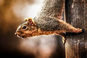 Fotos Hörnchen Großansicht