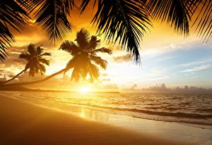 Hintergrundbilder Sonnenaufgänge und Sonnenuntergänge Meer Küste Tropen Palmen Strand Natur