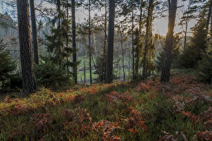 Picture Sweden Forests Autumn Trees Branches Grass Nature