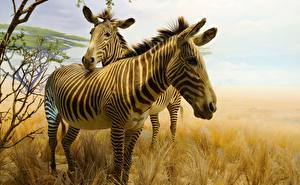 Photo Zebras Pictorial art Two Animals