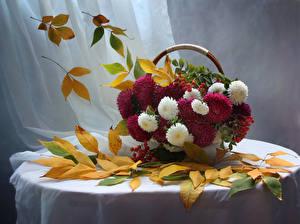 Bilder Astern Mehlbeeren Stillleben Weidenkorb Blatt Tisch Blumen