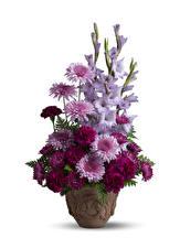 Papel de Parede Desktop Buquê Chrysanthemum Dianthus Gladíolo Fundo branco Vaso flor