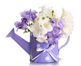 Hintergrundbilder Blumensträuße Freesien Weißer hintergrund Schleife Blumen