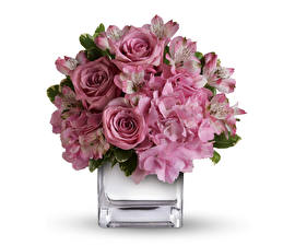 Wallpapers Bouquets Roses Hydrangea Alstroemeria White background Vase Pink color Flowers