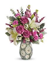 Papel de Parede Desktop Buquês Rosa Lírio Dianthus Fundo branco Vaso Flores
