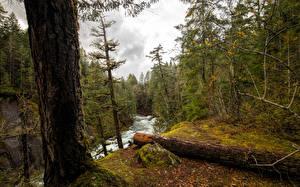 Hintergrundbilder Kanada Park Wälder Flusse Baumstamm Vancouver Island National Parks Natur