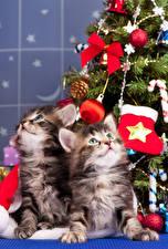 Image Christmas Cat 2 Kittens Balls Glance Animals