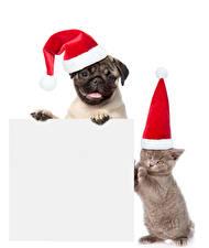 Bilder Neujahr Hunde Katze Weißer hintergrund Vorlage Grußkarte Zwei Mütze Mops (Hunderasse) Kätzchen