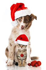 Pictures Christmas Dog Cats White background Winter hat Kitty cat Two Animals