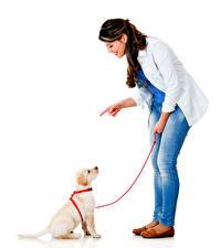 Fotos Hund Weißer hintergrund Braune Haare Lächeln Jeans Retriever Welpe Mädchens