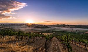 Bilder Italien Toskana Landschaftsfotografie Felder Sonnenaufgänge und Sonnenuntergänge Weinberg Strauch